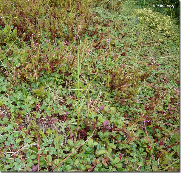 wildstrawberries011.jpg